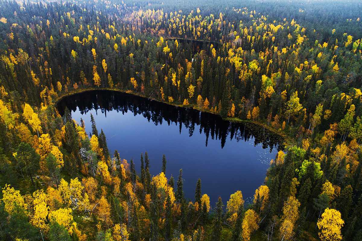 Forest lakes in Oulanka